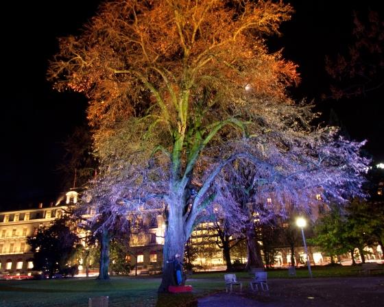 Tree Free Hugs – Genève